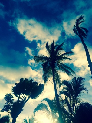 Palmtrees Florida