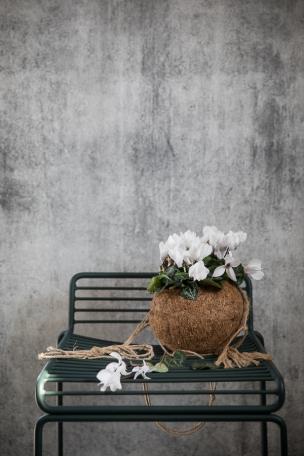 Pictures for Blomsterfräjandet